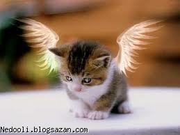 پیشی فرشته